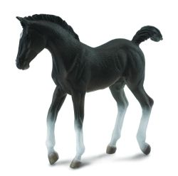 Tennessee Walking Horse Foal Black